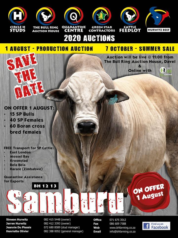 Boran Production Auction 2020